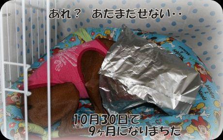 momiji-3-32.jpg