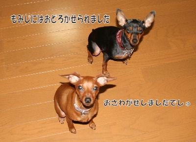 momiji-3-47.jpg