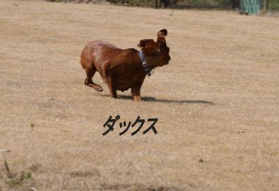 momiji-5-10.jpg