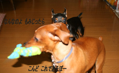 momiji-5-31.jpg