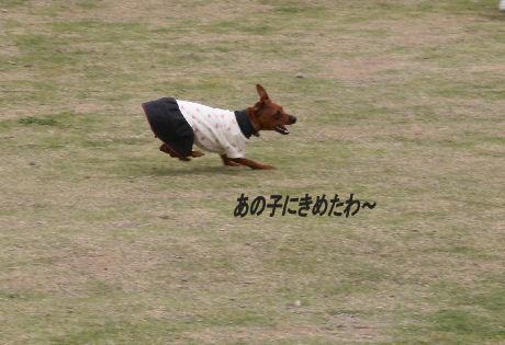 momiji-5-41.jpg