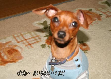 momiji-5-73.jpg