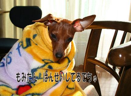 momiji-kowasu4.jpg