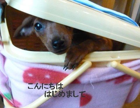 my-momiji1_20090130195201.jpg