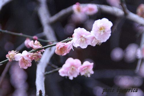 yushima4.jpg