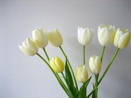 tulipsdeshun.jpg