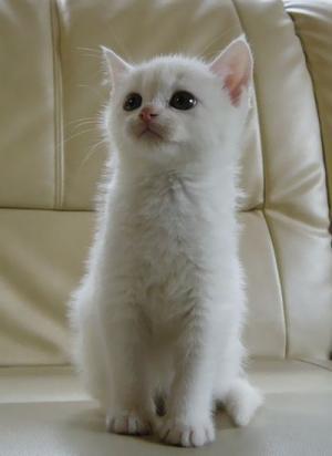 cat_1309_1.jpg