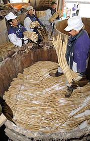 守口大根を漬け込む生産農家の人たち