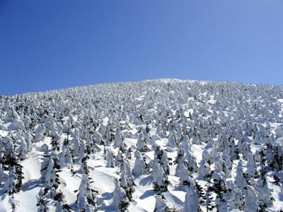 樹氷(ゴンドラより撮影)