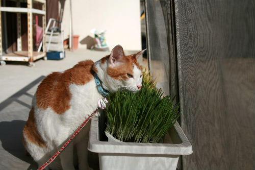 猫草れお②