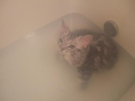 お風呂ニャーティン2