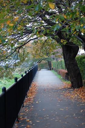 川辺の散歩道