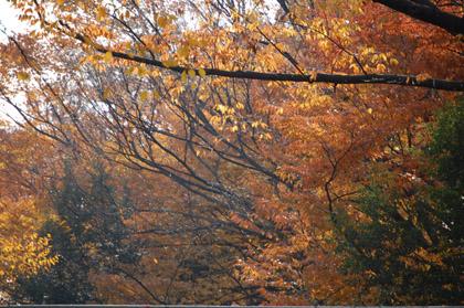 色づいた木々