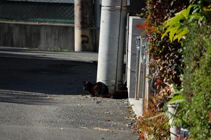 黒猫兄弟?