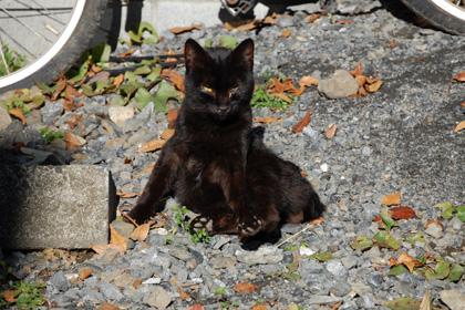 """黒猫兄?"""""""""""