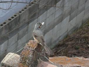 004 (79)鳥