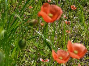005 (88)お花