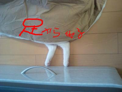 snap_nyaris_2012222452.jpg
