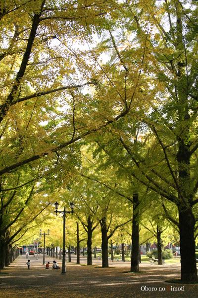 2008 11月5日 お散歩 県庁・江津湖 020