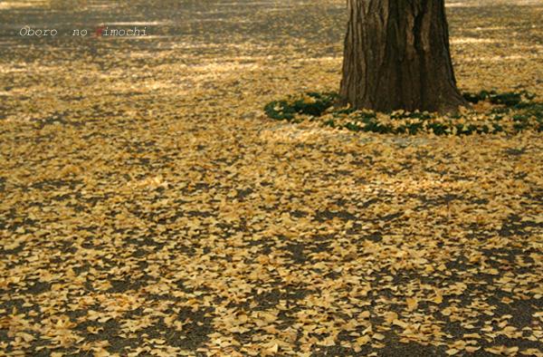 2008 11月5日 お散歩 県庁・江津湖 018