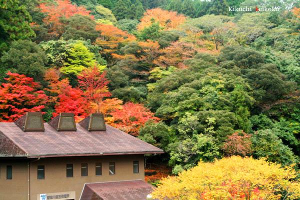 2008 11月9日 菊地渓谷 005