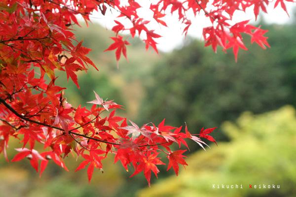2008 11月9日 菊地渓谷 010