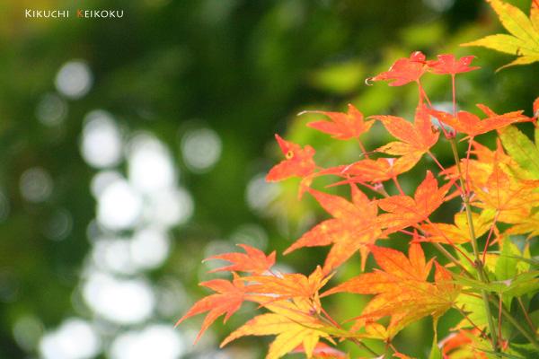 2008 11月9日 菊地渓谷 015