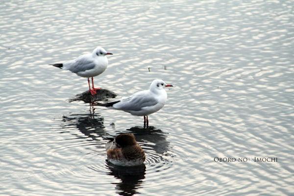 2008 11月17日 江津湖 074