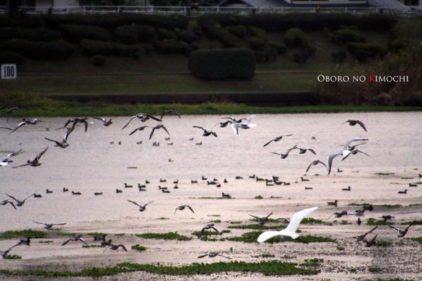2008 11月17日 江津湖 077