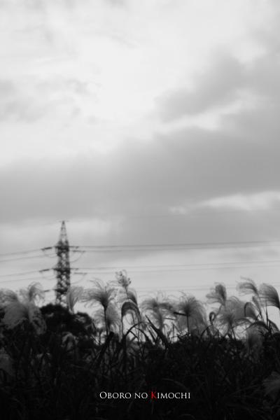 2008 11月17日 江津湖 120 mono