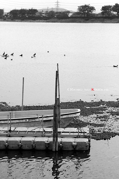 2008 11月17日 江津湖 087