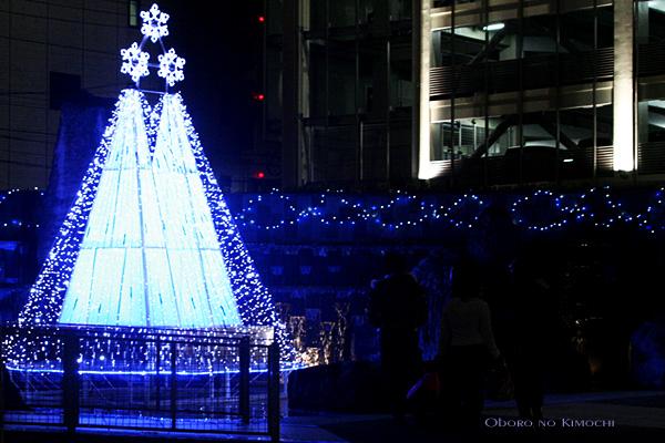 2008 12月20日 クリスマスイルミ 花畑 042
