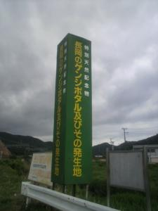 長岡のゲンジボタル及びその発生地1