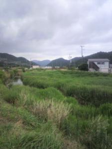長岡のゲンジボタル及びその発生地2