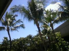 ハワイアン航空3