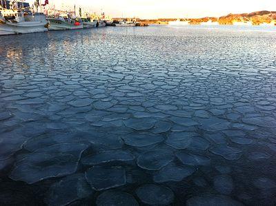 今年のハス氷2012年