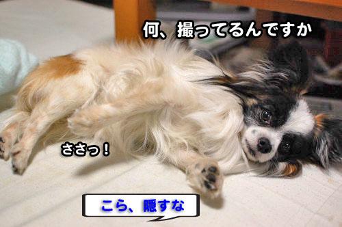 12DSC_2117.jpg