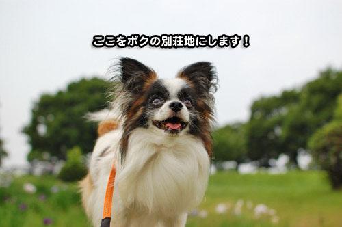 12DSC_3131.jpg