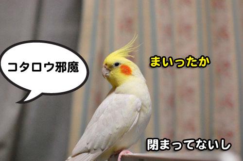 13DSC_2082.jpg