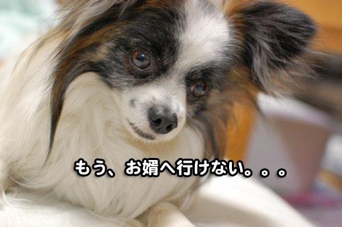 14DSC_2124.jpg