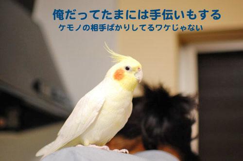1DSC_0753_01.jpg