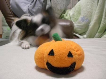 7かぼちゃま