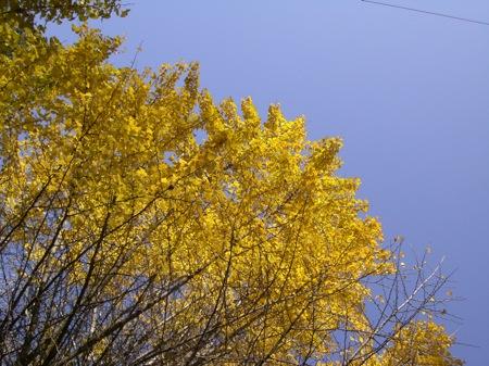 3銀杏並木の