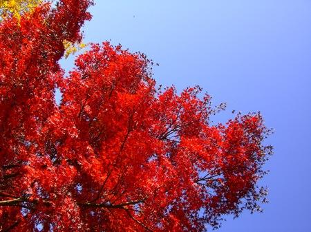3紅葉と青空