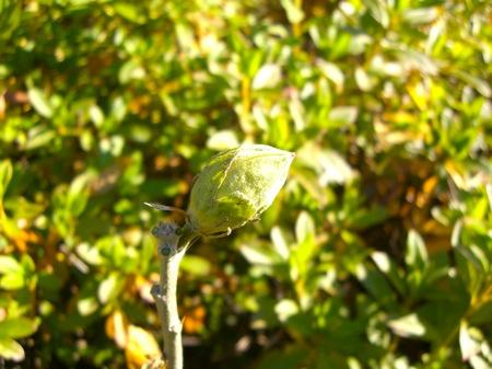 7何かの芽