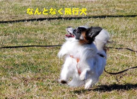 8なんちゃって飛行犬