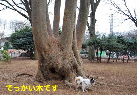 8でかい木です