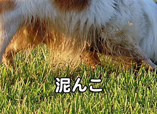 その後の汚犬様04