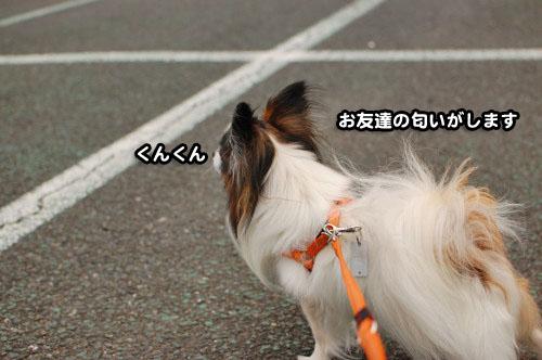 2DSC_3102.jpg
