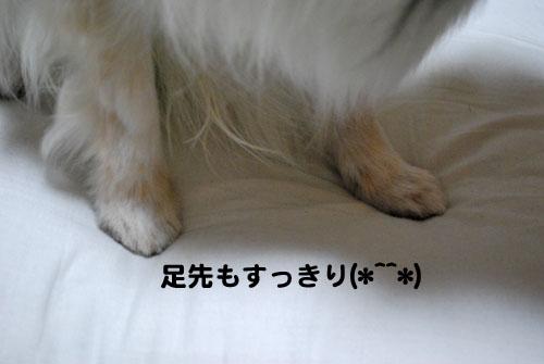 3DSC_1682.jpg